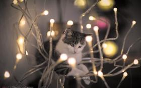 Обои кошка, кот, свет, мордочка, лампочки