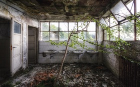 Обои комната, дерево, интерьер, умывальники