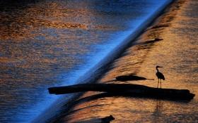 Картинка вода, солнце, свет, птица, игра, поток, силуэт