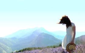 Обои поле, лето, трава, девушка, лаванда