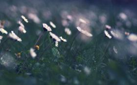 Картинка поле, лето, трава, макро, цветы, природа, зеленый