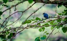 Картинка листья, дерево, ветви, птица, боке