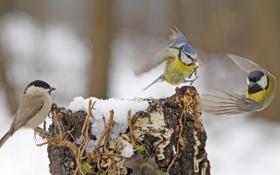 Картинка птицы, дерево, игра, пень, крылья, перья