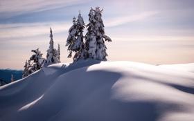 Обои снег, деревья, пейзаж, Зима, ели, мороз