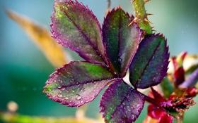 Обои листья, цвета, макро, природа, растение, шипы, капли воды