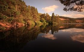 Обои лес, небо, природа, река