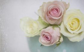 Картинка макро, нежность, розы, текстура, бутоны