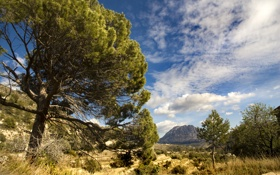 Обои деревья, долина, Испания, Spain, гора Пуч Кампана, Puig Campana Mountain