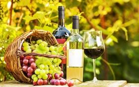 Обои виноград, корзина, бутылки, зелень, вино, бокал, сад