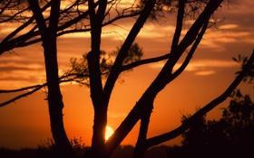 Обои деревья, закат, when the sun goes down