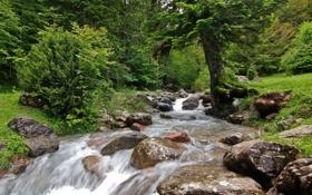 Обои лес, река, деревья, ручей, пейзаж, камни