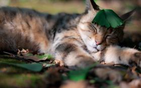 Обои трава, кот, усы, листья, природа, сон, тень