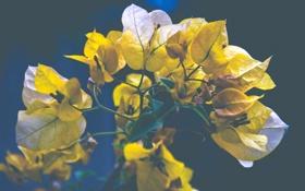 Обои листья, желтые, листочки