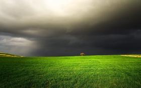 Обои поле, тучи, дерево