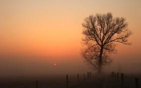 Картинка закат, природа, забор, туман, дерево