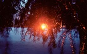Обои зима, снег, закат, елки