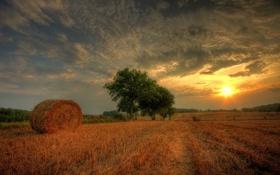 Обои закат, облака, поле, деревья, сено