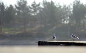 Обои природа, озеро, птицы