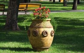 Картинка зелень, лето, цветы, парк, клумба, сквер