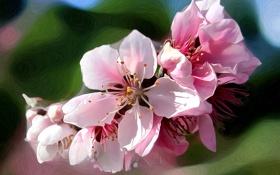 Картинка весна, линии, природа, сад, лепестки, штрих, цветы