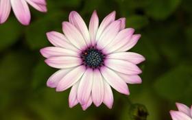 Картинка фотографии, природа, лепестки, макро, цветы
