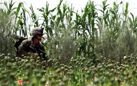 Картинка солдат, поле, маки