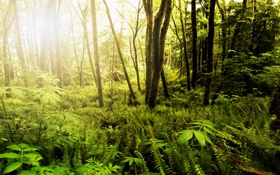 Картинка лес, USA, США