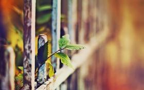 Картинка осень, листья, макро, забор, фото с настроением