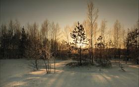 Картинка зима, снег, пейзаж, закат, вечер, сумерки