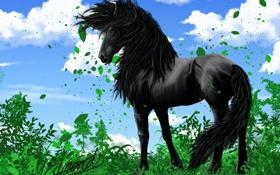Картинка небо, трава, взгляд, листья, облака, животное, конь