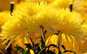 Обои природа, куст, букет, лепестки, сад