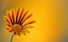 Обои цветок, макро, фон, ораньжевый