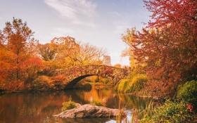 Картинка осень, листья, деревья, озеро, отражение, люди, листва