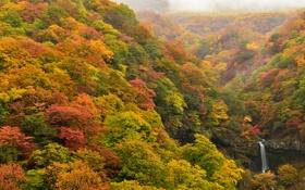 Картинка осень, лес, деревья, водопад, склон