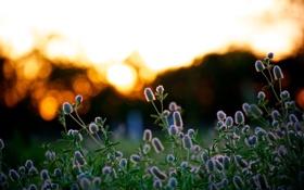 Картинка лето, свет, закат, природа, обои, растения, вечер