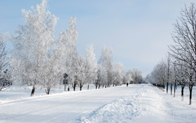 Картинка дорога, снег, деревья, иний, Зима