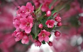 Обои макро, цветы, весна, цветение