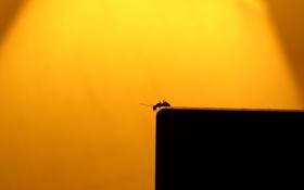 Картинка фон, цвет, минимализм, муравей, поход