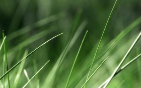 Обои обои, трава, фото, природа, фон, зелень, макро
