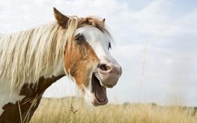 Картинка морда, радость, конь, лошадь, грива, гримаса