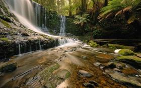 Обои лес, деревья, скала, водопад, бревна, камни.