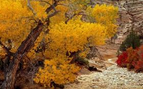 Картинка осень, цвета, деревья, камни, день, листочки