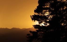 Обои небо, лучи, свет, деревья, горы, дерево, пейзажи