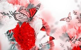 Обои бабочки, цветы, цветение, blossom, гвоздика, flowers, веточки