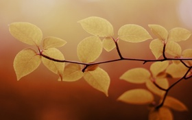 Обои листья, макро, природа, фото, фон, обои, растения