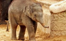 Картинка природа, слон, зоопарк