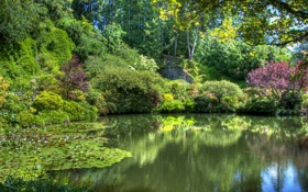 Обои деревья, пруд, сад, Канада, солнечно, кусты, Victoria