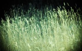 Обои зелень, поле, лето, трава, природа, фото, фон
