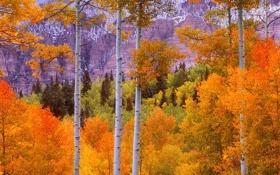 Картинка листья, лес, осень, деревья, горы, пейзаж, багрянец