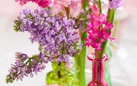 Картинка сирень, гиацинты, цветы